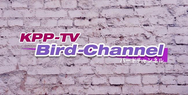 bird-c-banner